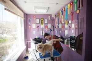 Как организовать собственный бизнес салон для собак